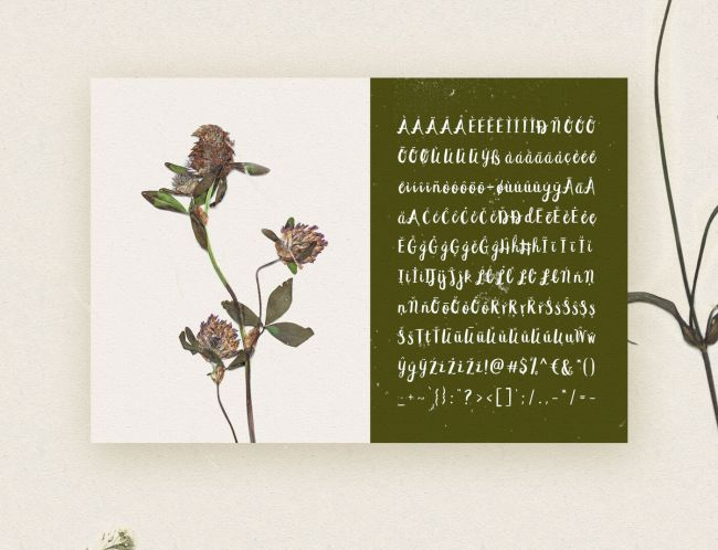 Beautiful Free Brush Fonts For Graphic Designer